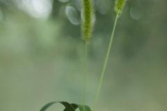 Grass No.1